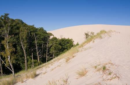 Опустынивание земель - что это такое? причины, последствия, пути решения проблемы