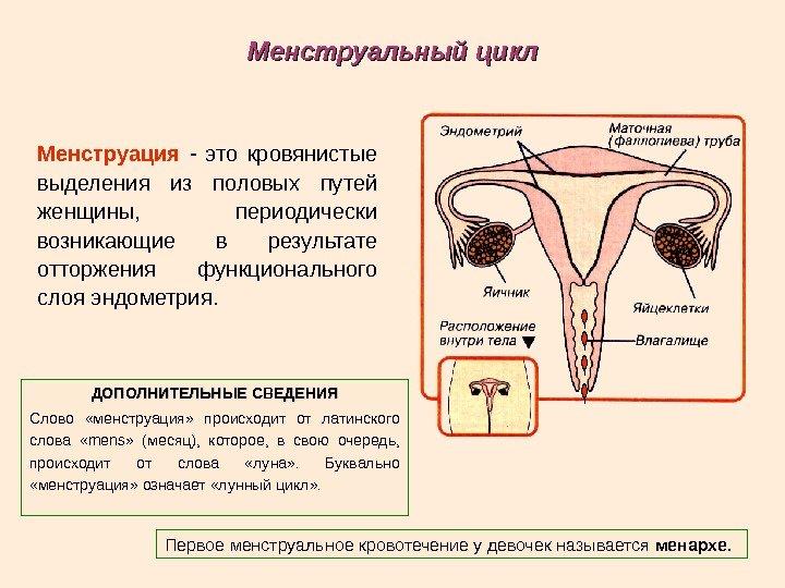 Месячные (менструация). всё самое важное, что вы должны знать!