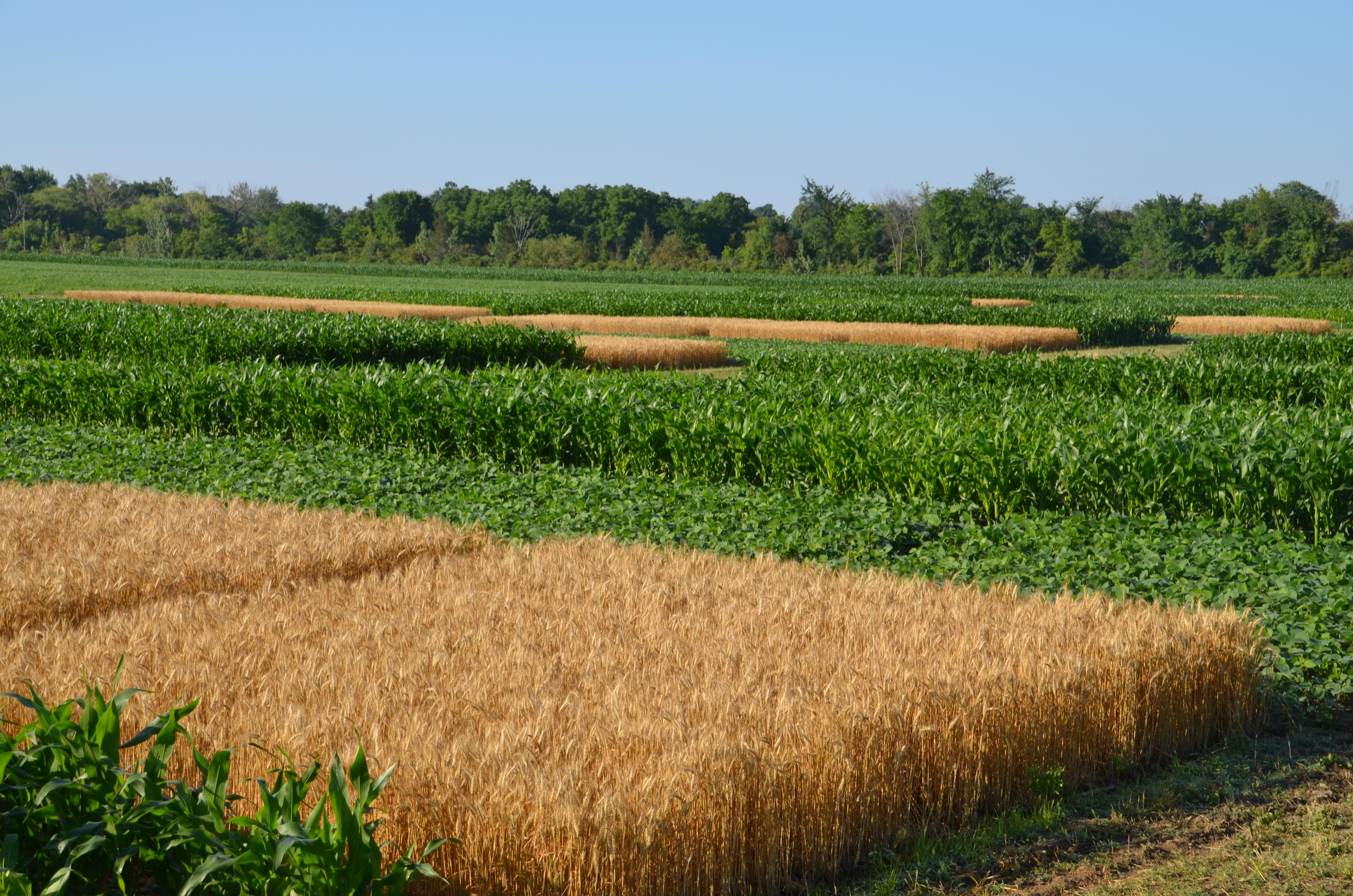 Что такое земледелие? история возникновения земледелия
