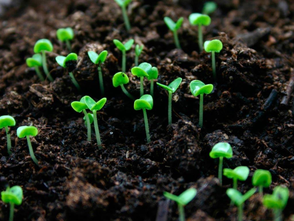 Сапропель как удобрение: описание, состав, как использовать, отзывы