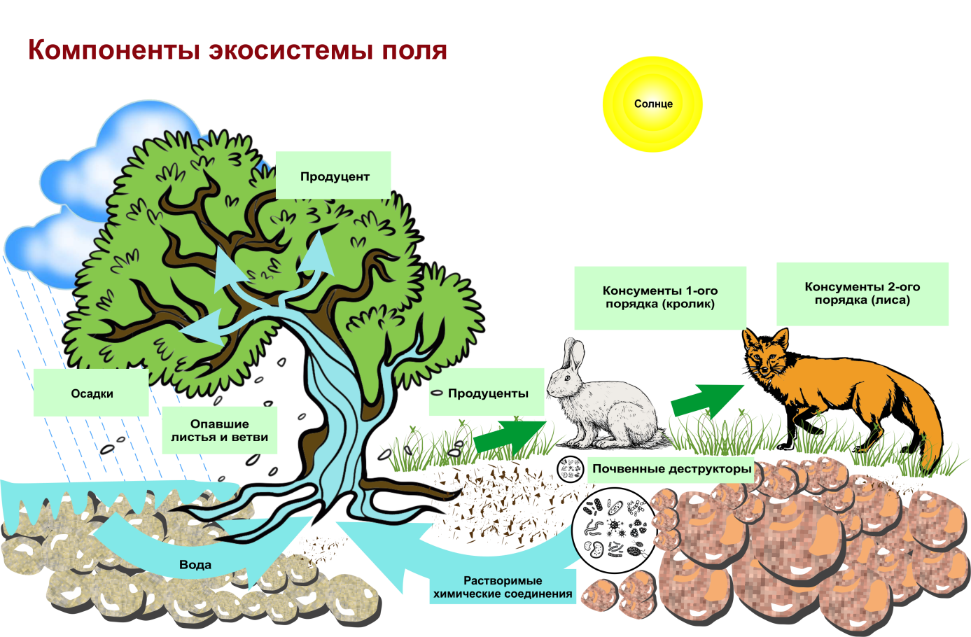 Биоценоз - это что? структура биоценоза: пространственная и видовая :: syl.ru