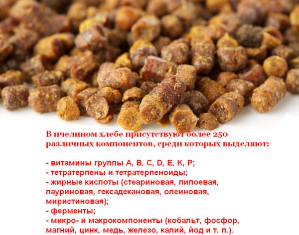 Перга пчелиная: полезные и лечебные свойства продукта, как её принимать при различных заболеваниях, противопоказания, отзывы