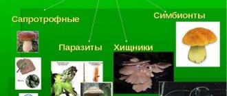 Сапрофиты и паразиты: что это такое и примеры бактерий - проздоровье
