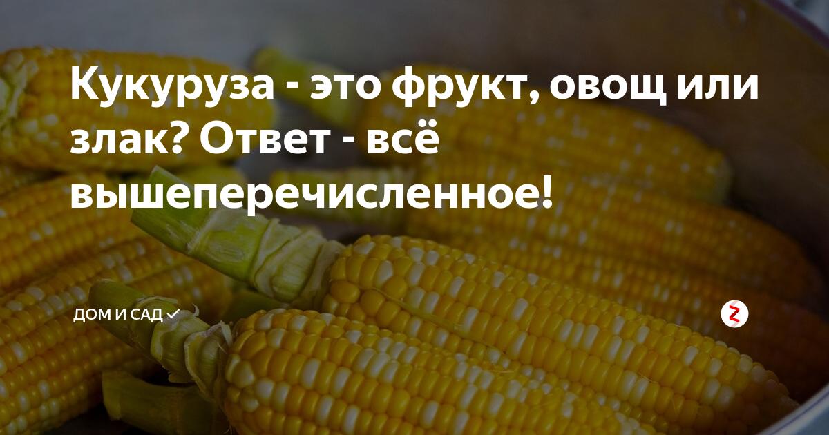 Кукуруза фуражная: что это такое, чем она ценна, как выращивается и где применяется, чем отличается от пищевой