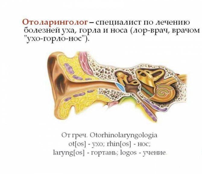 Лор - это... оториноларинголог что лечит?