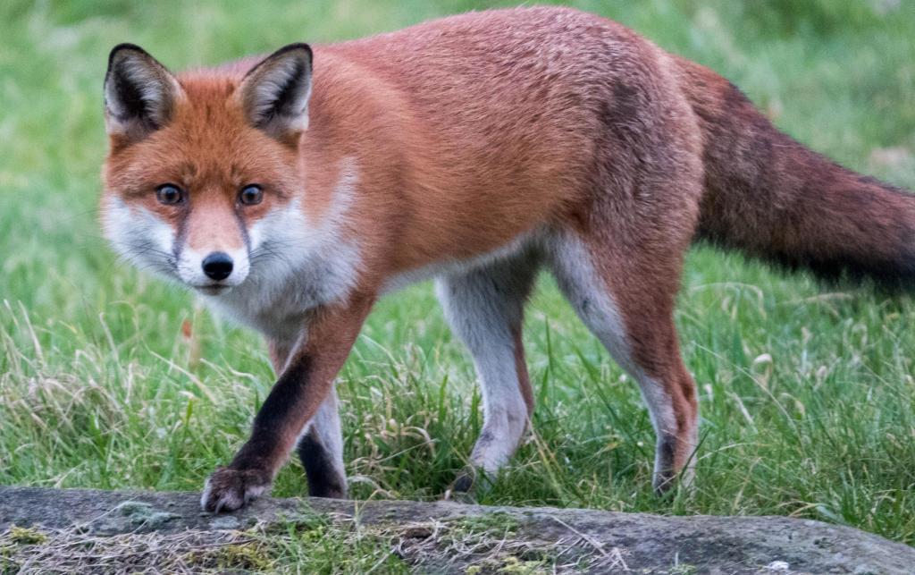 Кто делает чучела из животных и как их называют? - fin-az.ru