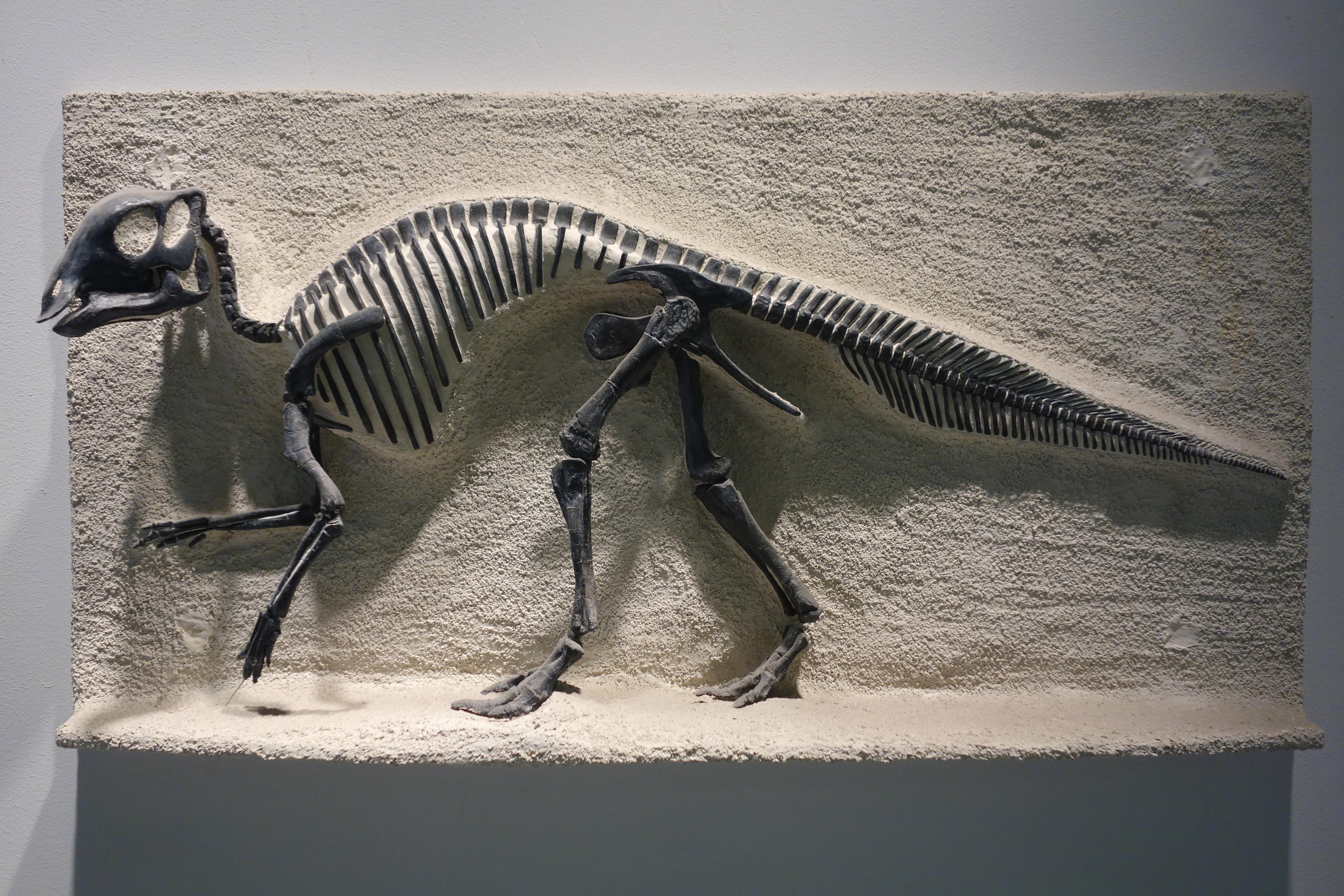 Палеонтология — википедия. что такое палеонтология