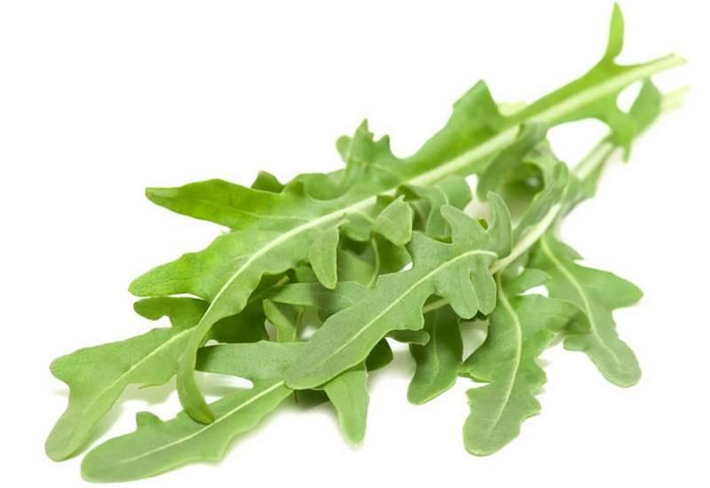 Рукола. полезные свойства и интересные рецепты с ней
