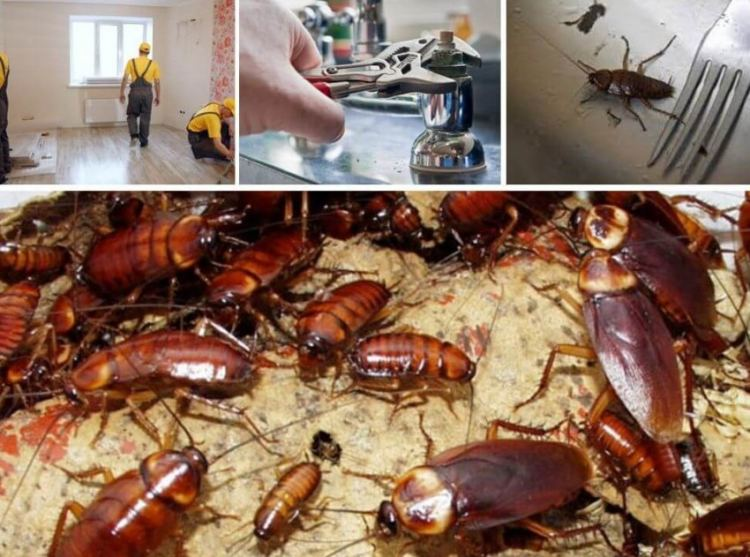 Что представляют собой домашние тараканы   портал о борьбе с клопами, блохами, тараканами и другими вредителями что представляют собой домашние тараканы