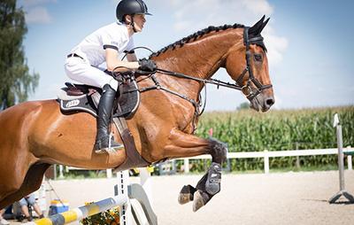 Конкур: что это такое, мастер классы и тренировки на лошадях для детей, схемы маршрута по конному спорту, виды препятствий, разряд