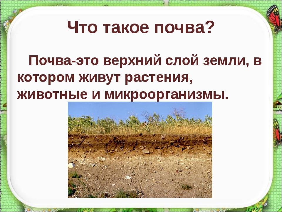 """Презентация """"что такое почва"""" (3 класс) по окружающему миру – скачать проект"""