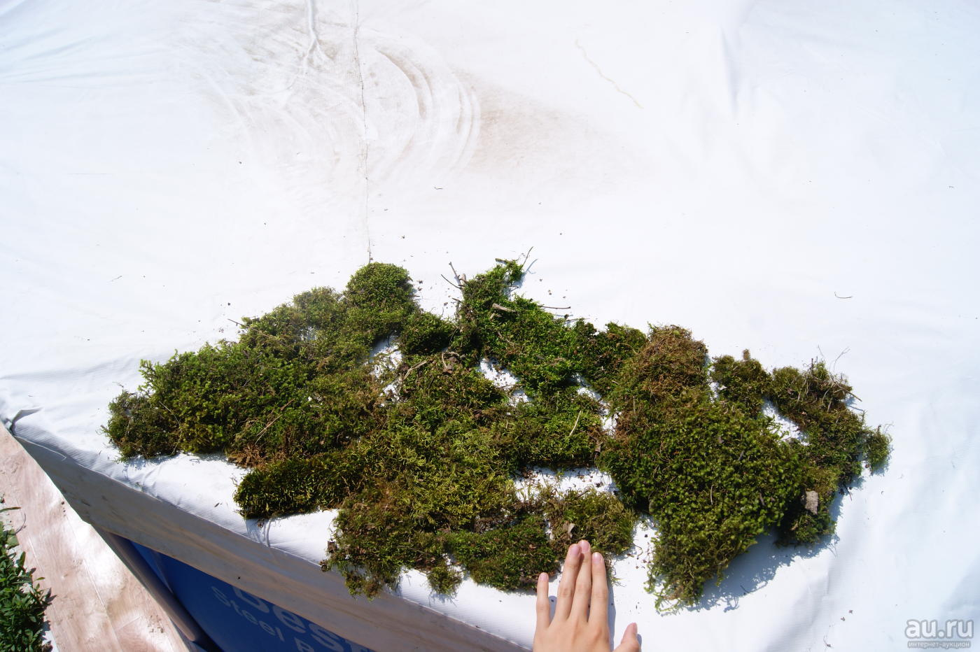 Как найти сфагнум в незнакомом лесу. записки следопыта.