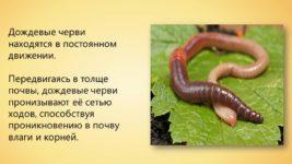 Кто такие червяги и опасны ли они для людей?