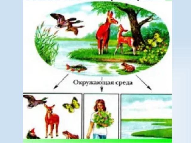 Факторы среды и их классификация