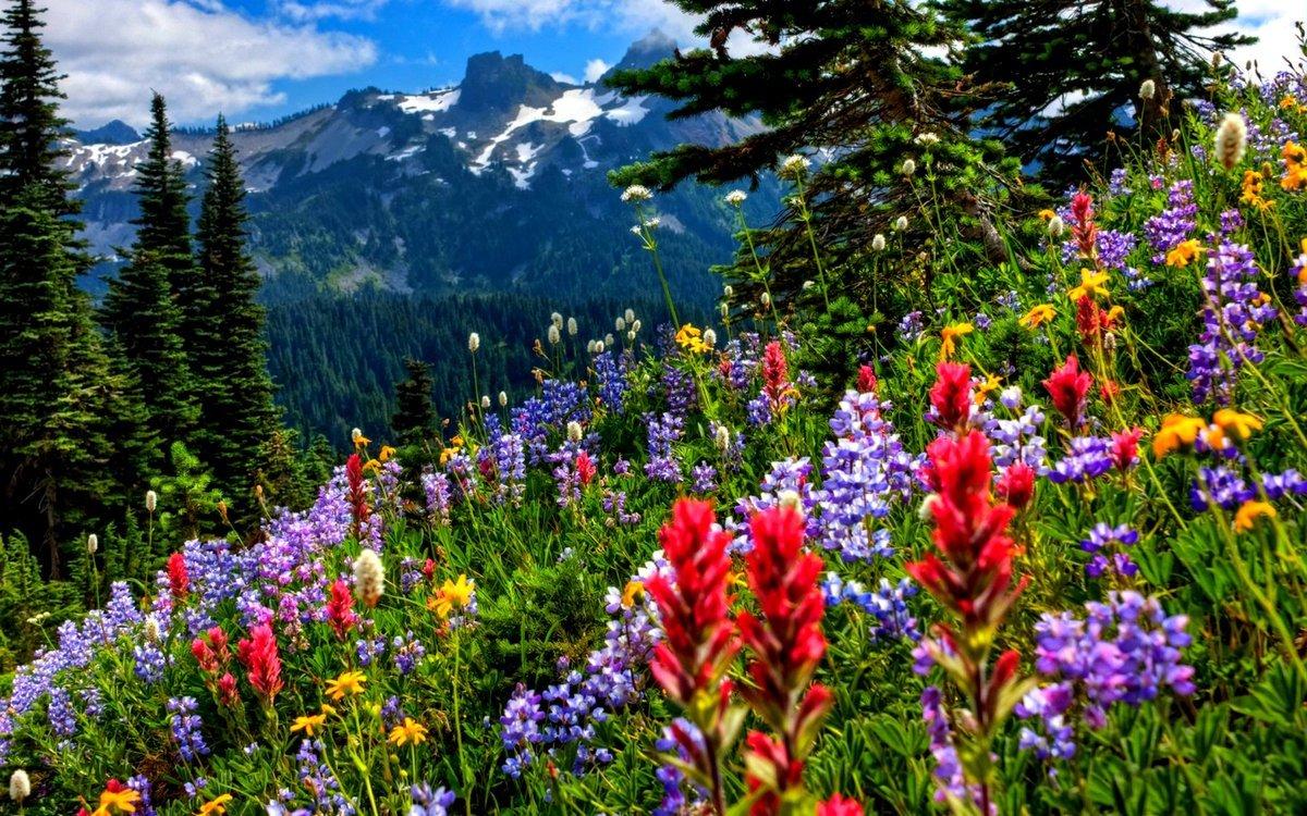 Живая и неживая природа – что это, определение, описание и фото