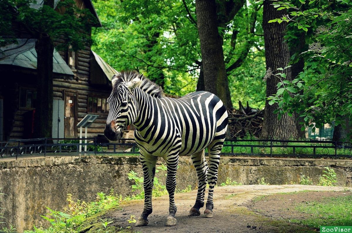 Что такое зоопарк? особенности
