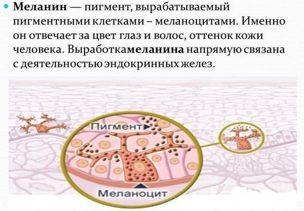 Что такое меланин в организме человека: для чего нужен и какие функции