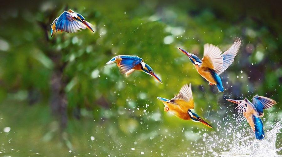 Птицы россии – список, виды, название, описание, ареал, фото и видео  - «как и почему»
