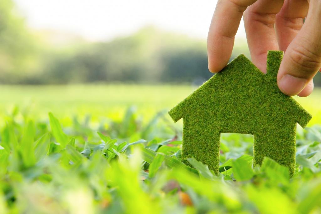 Экология: история и этапы развития, законы и задачи экологии