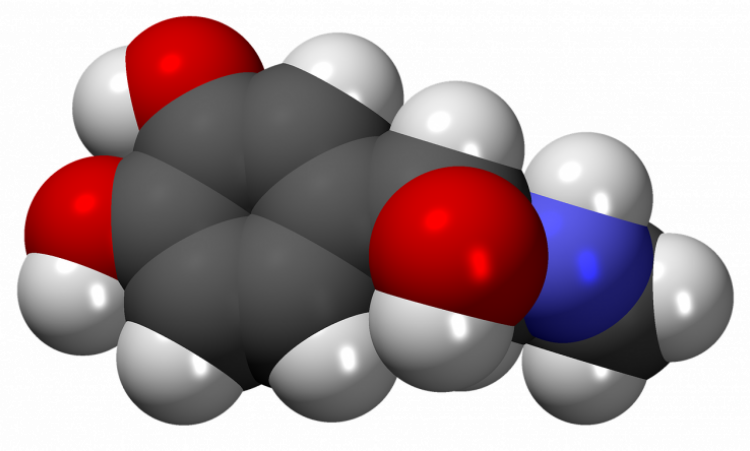 Виды гормонов человека и их функции. виды анализов на гормоны