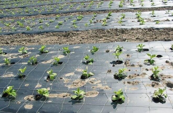 Мульчирование почвы в саду и огороде - польза и виды мульчи