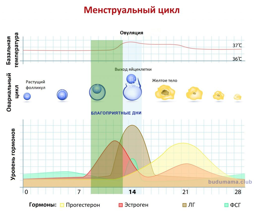 Что такое менструальный цикл: причины гормонального сбоя и способы поддержания цикла