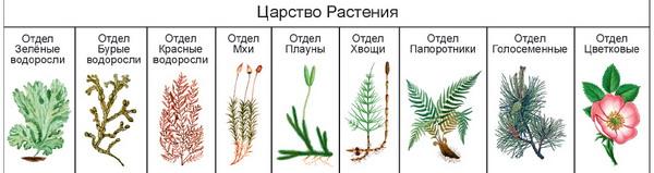 """Конспект """"низшие растения. водоросли"""" - учительpro"""