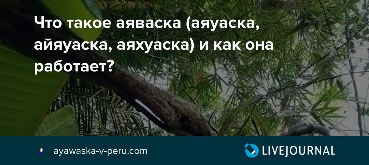 Что такое аяхуаска (аяваска) ???? - польза, состав, фото растения