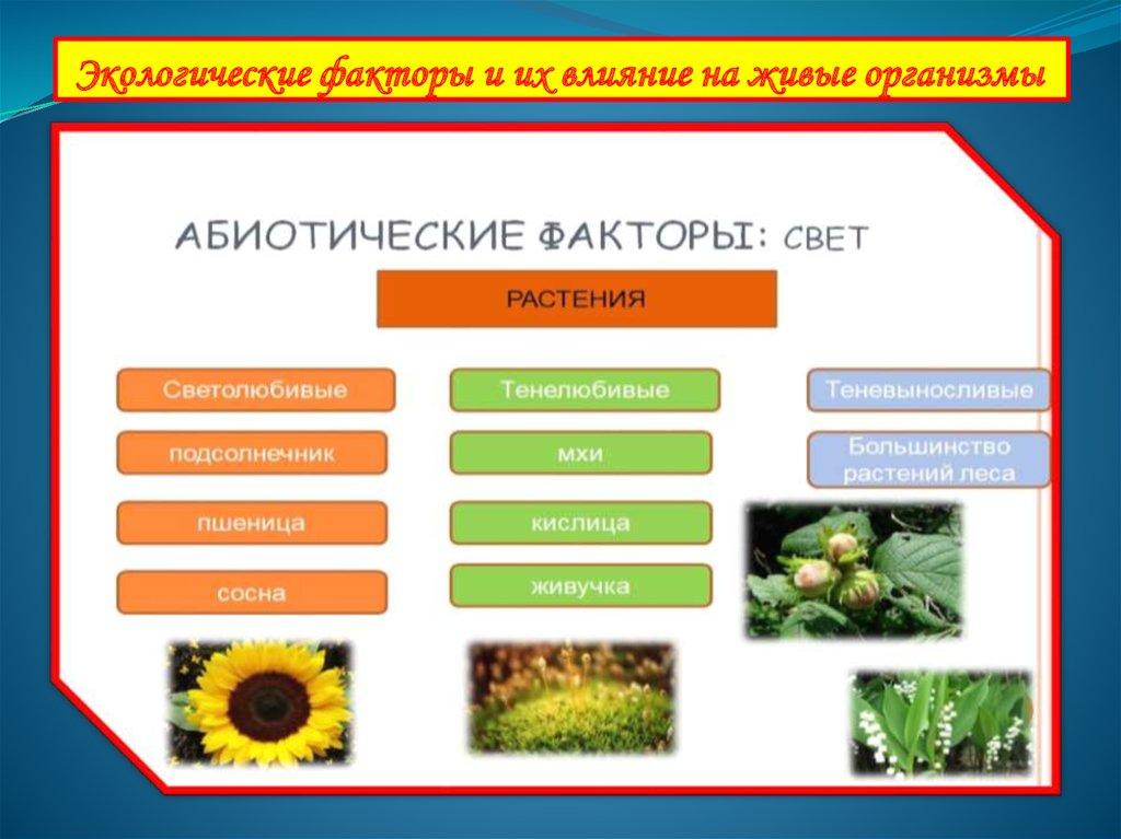 Экологические факторы окружающей среды