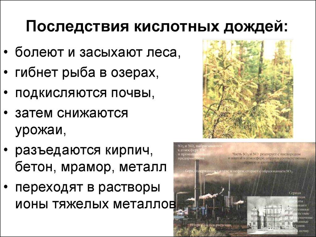 Кислотные дожди - причины и последствия выпадения кислотных дождей кратко