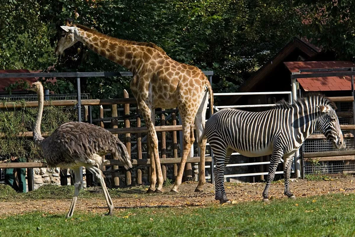 Зоопарк — википедия переиздание // wiki 2