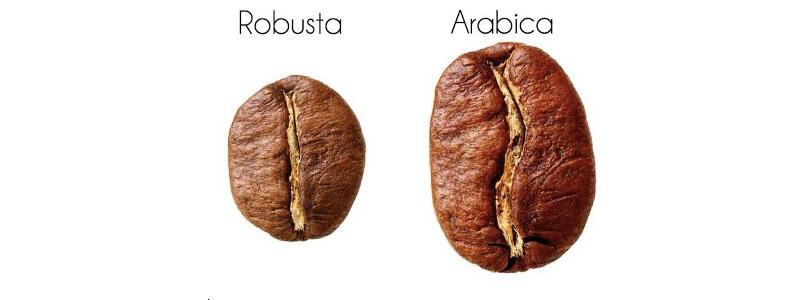 Что такое робуста и в чем его различие с арабикой