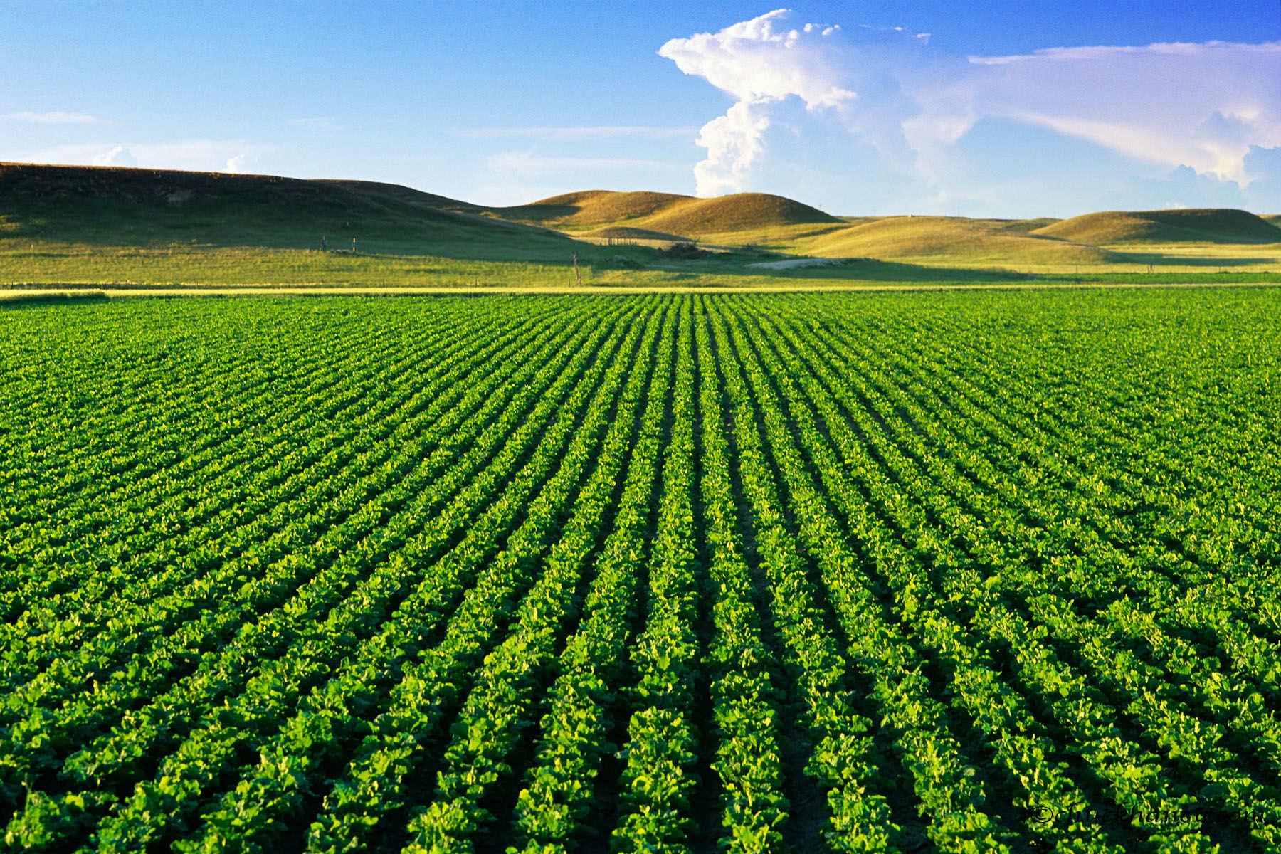 Земледелие — википедия. что такое земледелие