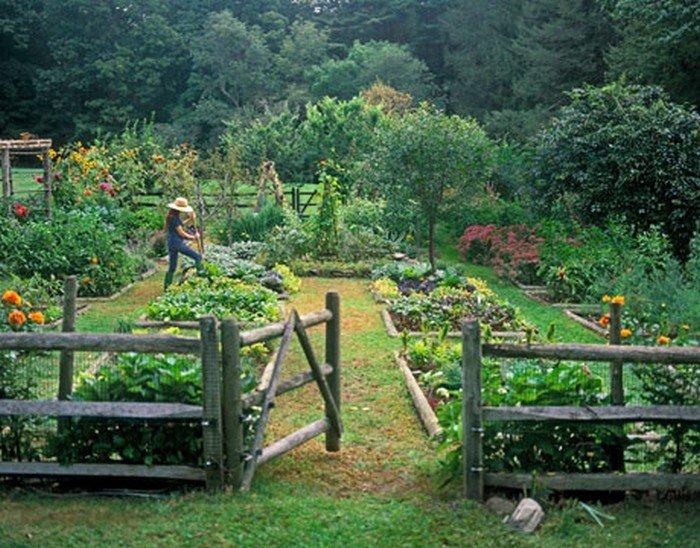 Пермакультурное земледелие на даче: основы