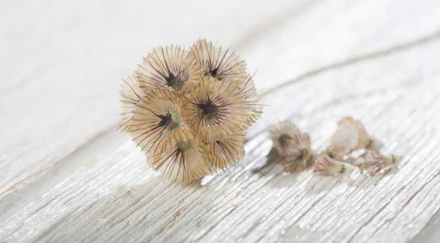 Стратификация семян многолетников – подробная инструкция с фото | в цветнике (огород.ru)
