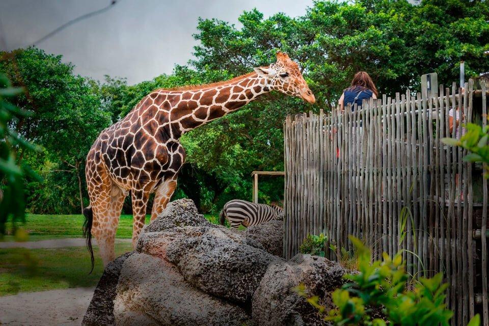Московский зоопарк — цены на билеты 2020, режим работы, как добраться