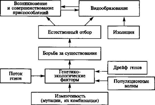 Микроэволюция — википедия. что такое микроэволюция