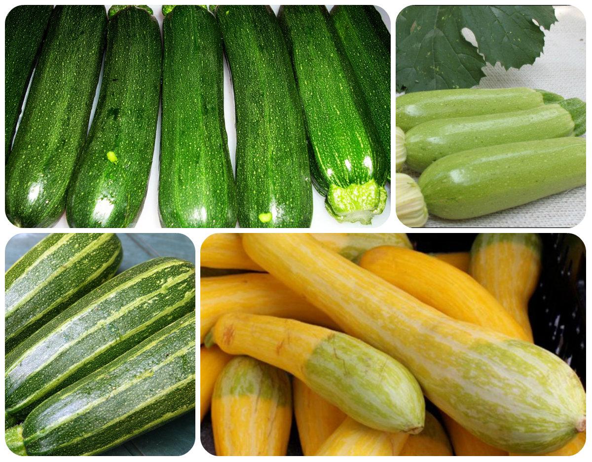 Собираем урожай кабачков и цукини: 10 интересных рецептов - будет вкусно! - медиаплатформа миртесен