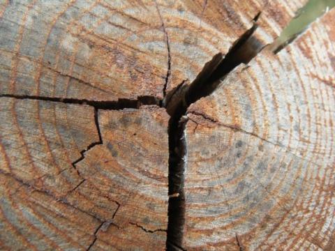 Дефекты обработки древесины — википедия. что такое дефекты обработки древесины