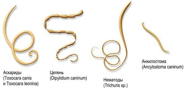 Что такое паразит?