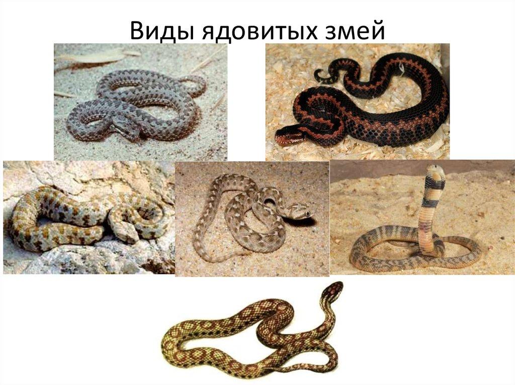 Змеи — википедия с видео // wiki 2