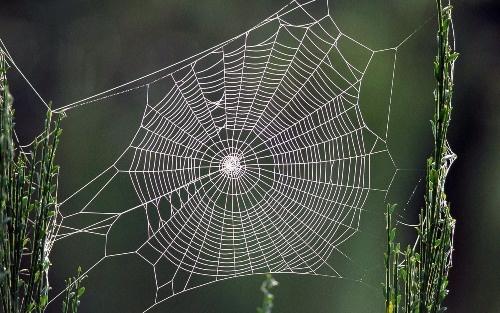 Как паук плетет паутину: где она образуется, из чего состоит, зачем нужна