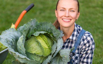 Кила капусты— опасная болезнь: профилактика имеры борьбы | огород (овощи)