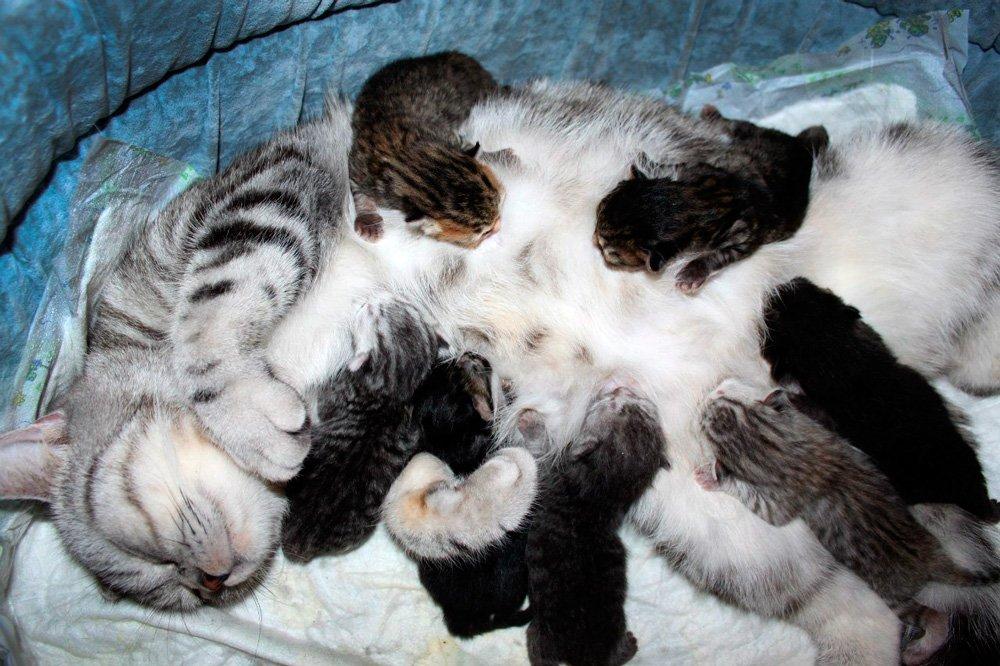 Стерилизация кошки от а до я: советы ветврача