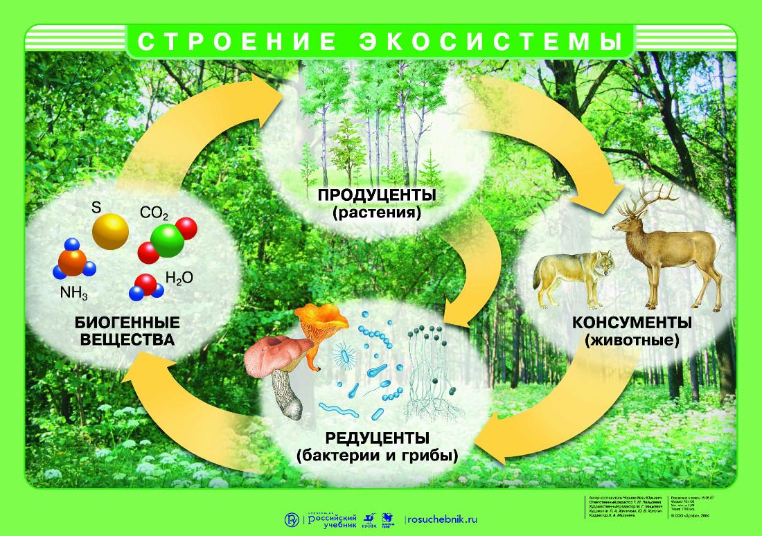 Что такое консументы? пищевые цепи и трофические уровни в экосистеме