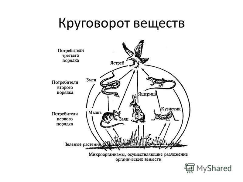 Что такое круговорот веществ? круговорот веществ в экосистеме. схема круговорота веществ в природе