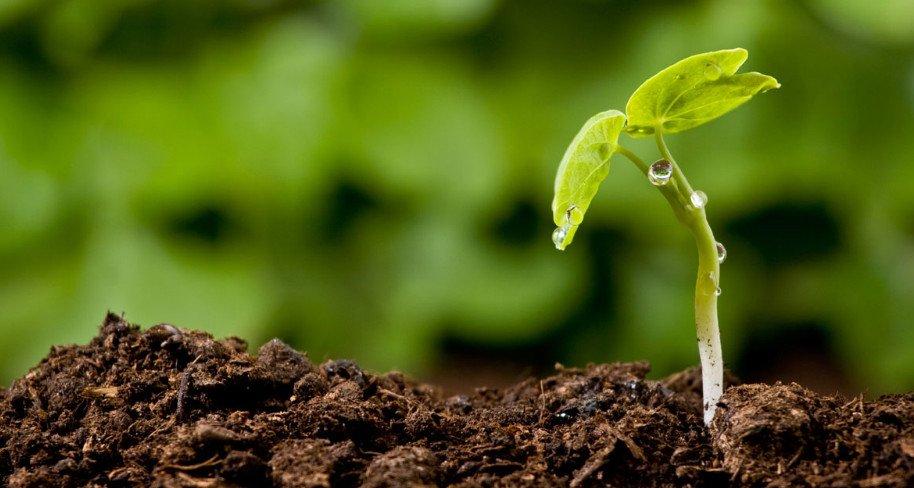 Плодородие почвы: определение и повышение уровня