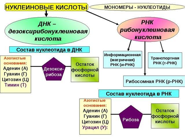 Транскрипция (биология)