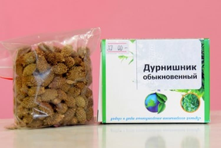 Растение датура (datura): полезные свойства дурмана и возможный вред от его употребления