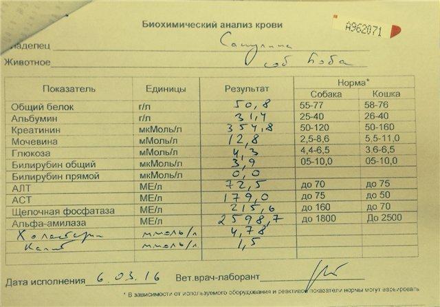 Что показывает анализ крови аццп: расшифровка результатов